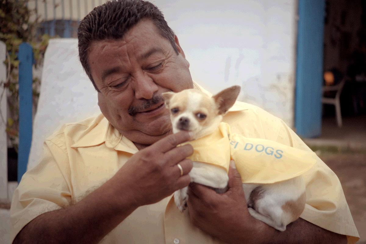 Sponzorirani video – Wi-Fi dogs