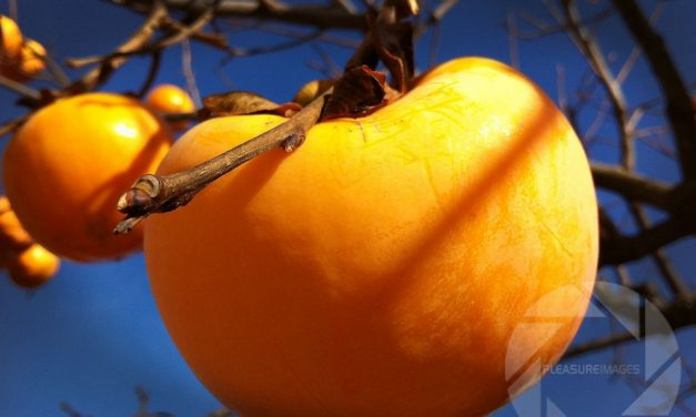 Persimmon pudding with a rum